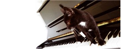 Black and White Cat on the Piano