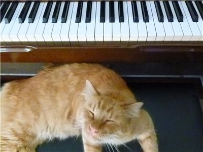 Cat and the Piano