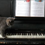 Gray Cat on the Piano
