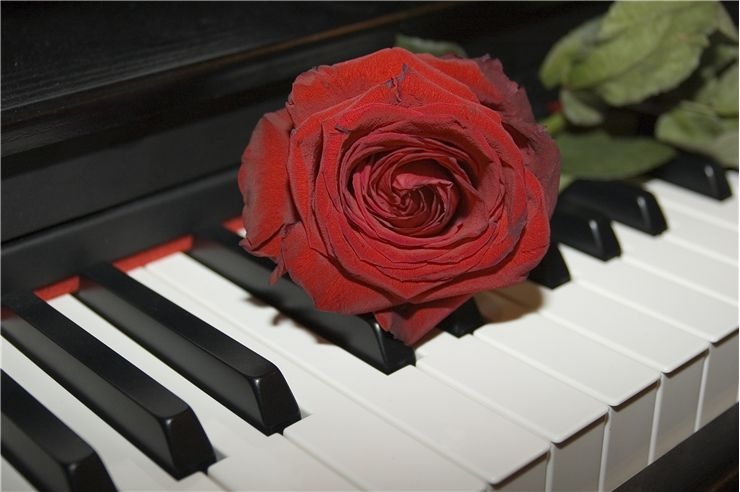 Red Rose on the Grand Piano